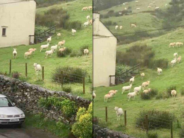 Chlapec viděl ovečky, které stály nehybně a  zdálo se, že to nejsou skutečná zvířata:  vysvětlení bylo mnohem jednodušší