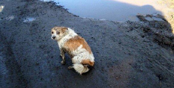 Pes ležel na kraji cesty a prosil lidi o pomoc