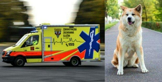 Pes zablokoval cestu sanitce, sestřička se ho pokusila odehnat, ale ten se tvrdohlavě vracel zpátky