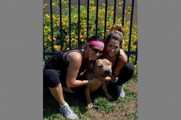Jedenáctiletý pitbul nechtěl majitele pustit do domu: chytrý pes vycítil něco zlého