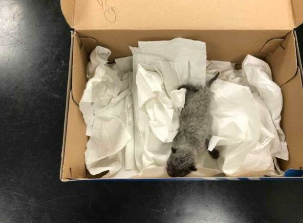 Muž pracoval v kůlně, uslyšel zvláštní pískání, které pocházelo z ulice: když se šel podívat, našel krabici, v níž ležela malá koťata