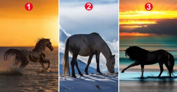 Psychologický obrazový test pro ženy: vybraný kůň odhalí jaké jedinečné vlastnosti vaší postavy přitahují muže