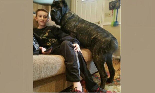 Toto štěně je pravděpodobně největší plemeno na světě: jeho rozměry vás vyděsí