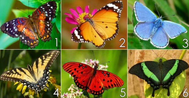 Psychologický test: vybraný motýl pomůžete zjistit, co vám brání v úspěchu