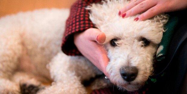 Veterinář prozradil, jaké je poslední přání zvířat před koncem jejich života