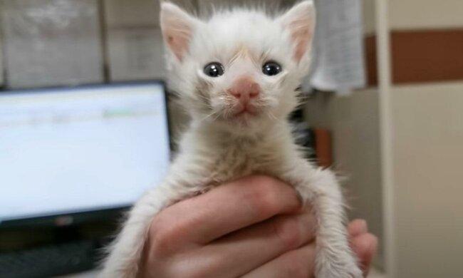 Na parkovišti bylo nalezeno slepé kotě, které bylo předáno k údržbě. Ale brzy si žena uvědomila, že se s ním nemůže rozloučit