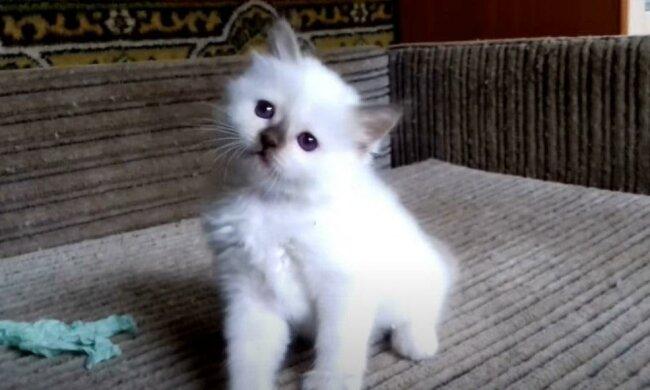 Dívka v popelnici našla kotě a odnesla si ho domů. Měla podezření, že mazlíček je čistého plemene , ale zjistila pravdu až o rok později