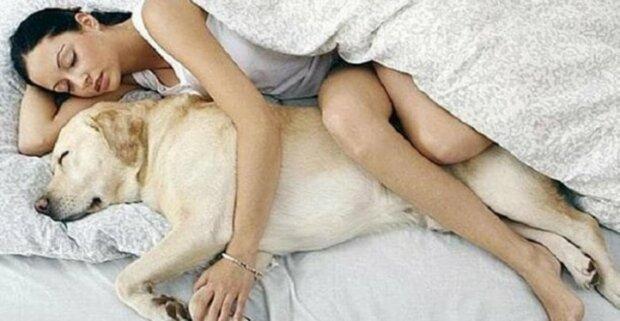 7 důvodů, proč nechat svého psa spát v posteli