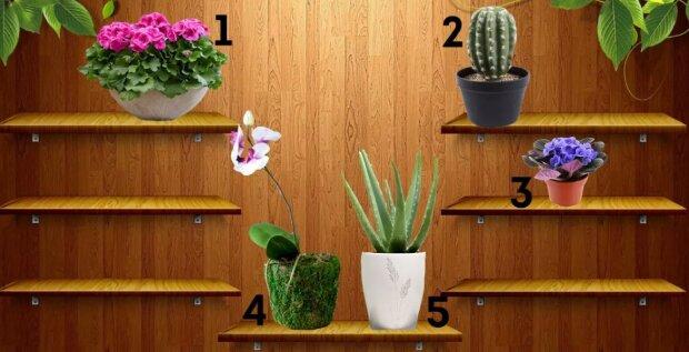 Psychologický test: vybraná pokojová rostlina vám řekne, co vám brání být šťastným člověkem