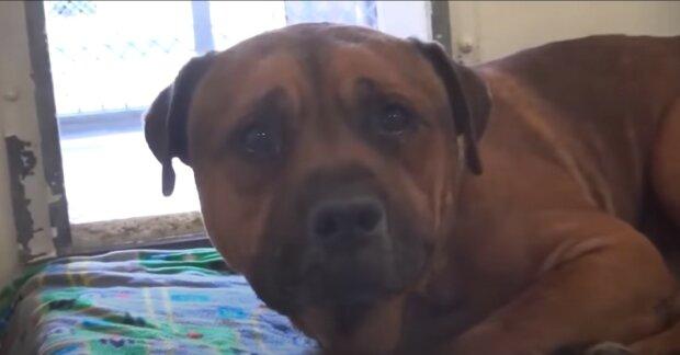 Co je třeba dělat když pes touží:  Kynolog popsal, jak správně vyvést psa z tohoto stavu