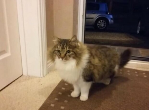 Kluk si vzal toulavou kočku a ona ho neočekávaně překvapila