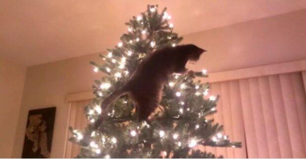 Udržujeme náš stromeček v bezpečí: jak zajistit, aby kočka už nikdy neskákala tam, kam by neměla